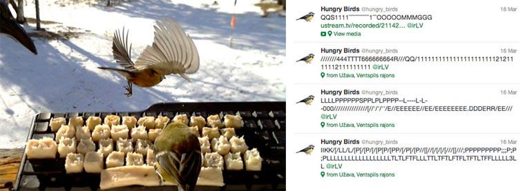 Echte twitternde Vögel hungry_twitter_birds_01