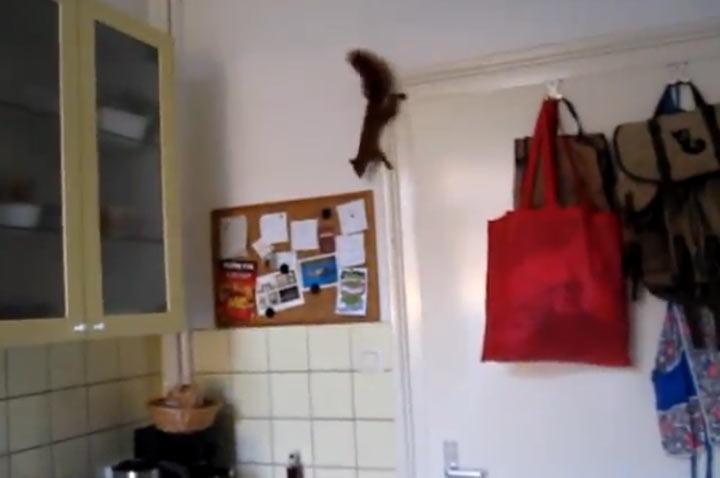 Eichhörnchen gone wild ninja_squirrel