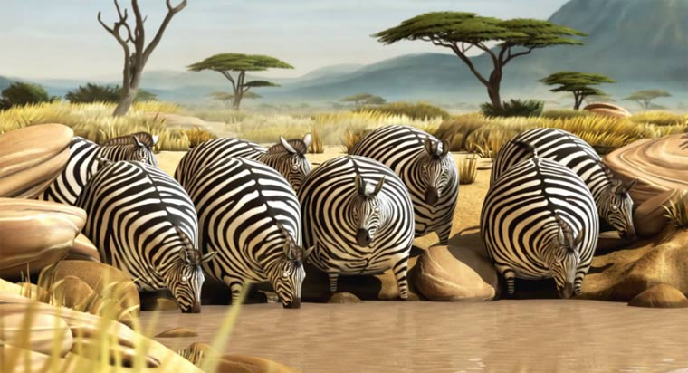 Kugelrunde Wildtiere - Rollin' Safari