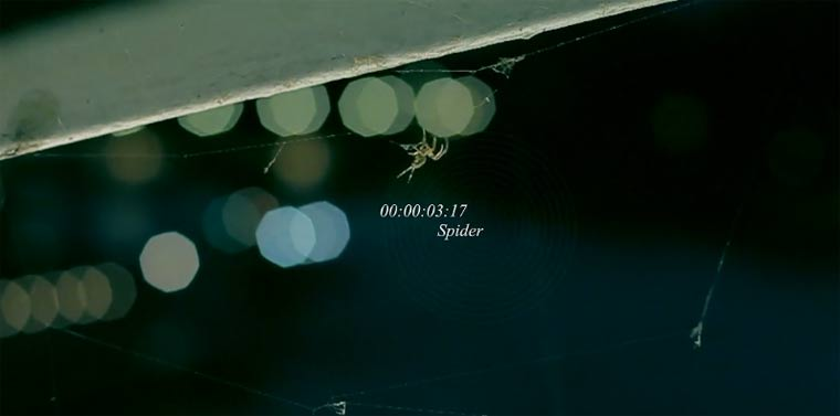 Spinnennestbau schön-schaurig: Spider spider
