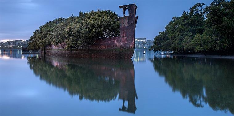 102 Jahre altes Schiffswrack wird zum Wald SS_Ayrfield_02