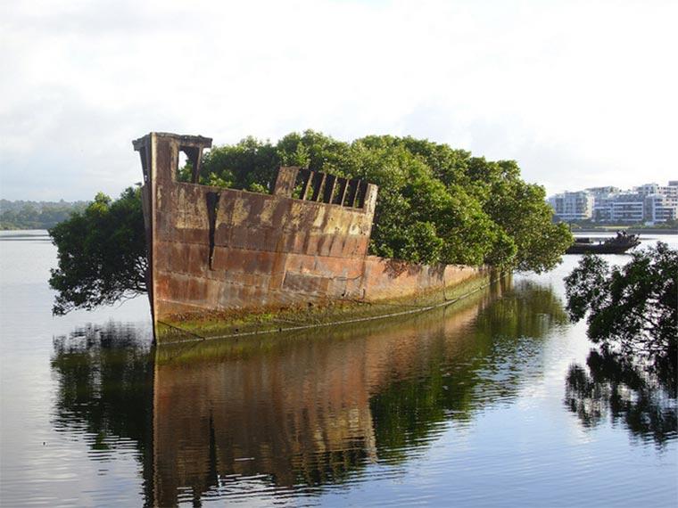 102 Jahre altes Schiffswrack wird zum Wald SS_Ayrfield_03