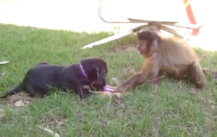 Gib dem Affen lieber keinen Zucker