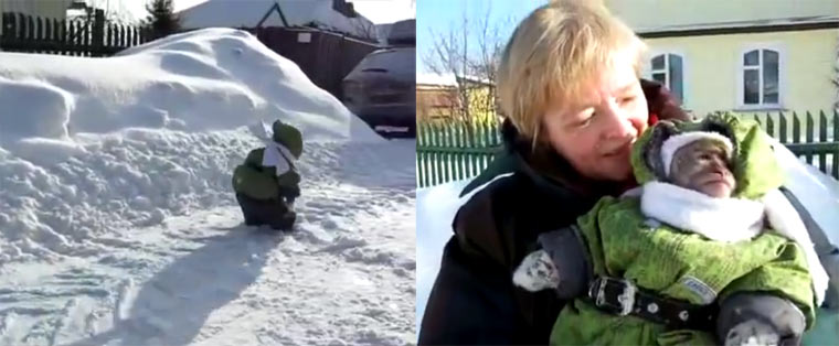 Äffchen in Kinderklamotten im Schnee apekidsnow