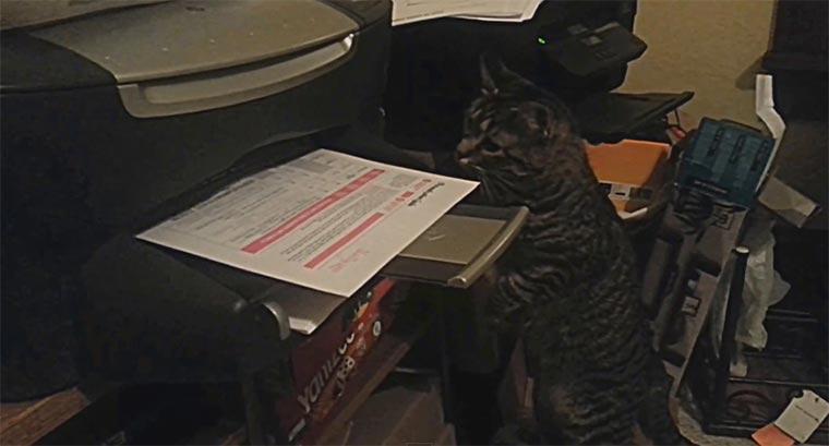 Katze benötigt ganz dringend Ausdruck für Business-Termin catprinter