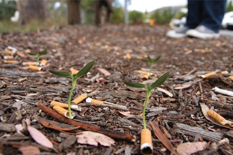 Zigaretten, aus denen Pflanzen werden cigg_seeds_02