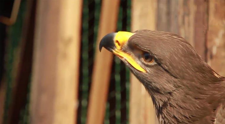Adlerflug mit Kopfkamera