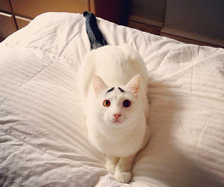 Sam, die Katze mit Augenbrauen eyebrow_cat_01