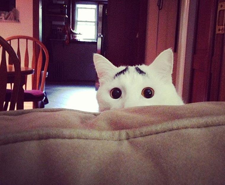 Sam, die Katze mit Augenbrauen eyebrow_cat_02