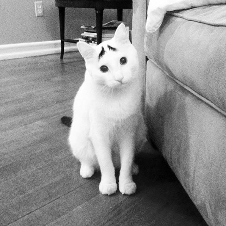 Sam, die Katze mit Augenbrauen eyebrow_cat_03