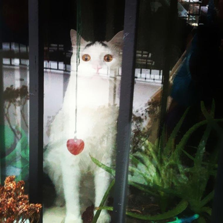 Sam, die Katze mit Augenbrauen eyebrow_cat_05
