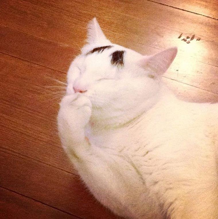 Sam, die Katze mit Augenbrauen eyebrow_cat_06