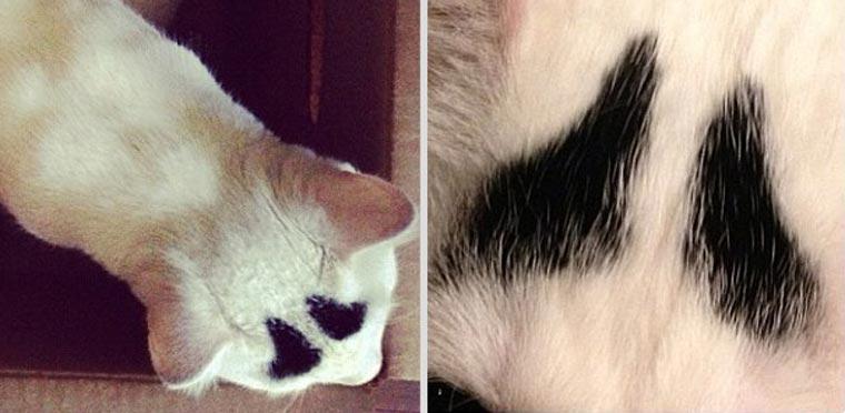 Sam, die Katze mit Augenbrauen eyebrow_cat_07