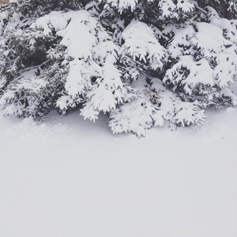 Instagram-Spiel: Wo ist Hund Momo?
