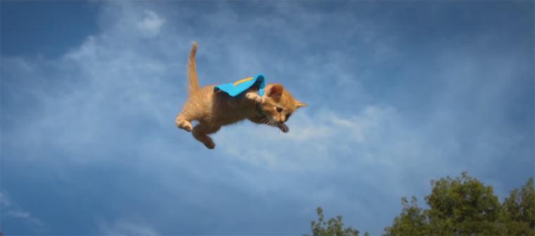 Fliegende Kätzchen vs. fliegende Welpen