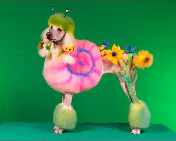 Schrecklich absurd: Cosplay für Hunde hundescosplay_04
