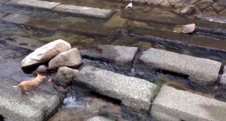 Hund aportiert für Wasserstrom hundstromballspiel