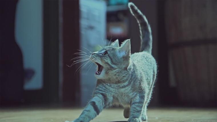 Katzen kämpfen um Socken