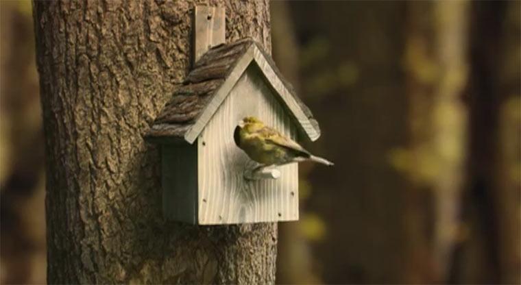 Robinsons Vogelhaus robinsonsbirdhouse