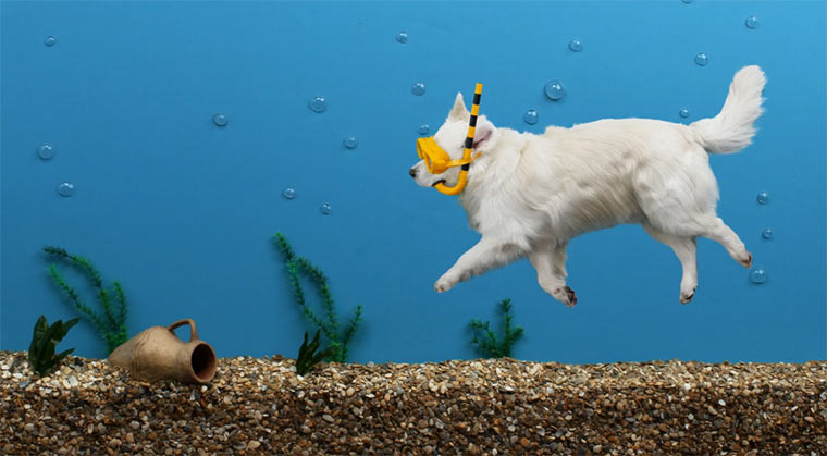 Liegender Hund wird Stopmotion-Protagonist stopmotionhund