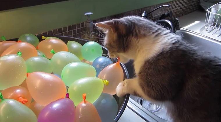Katze vs. Wasserbomben wasserballonkatze