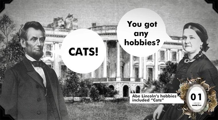 36 Fakten über Katzen 36_facts_about_cats