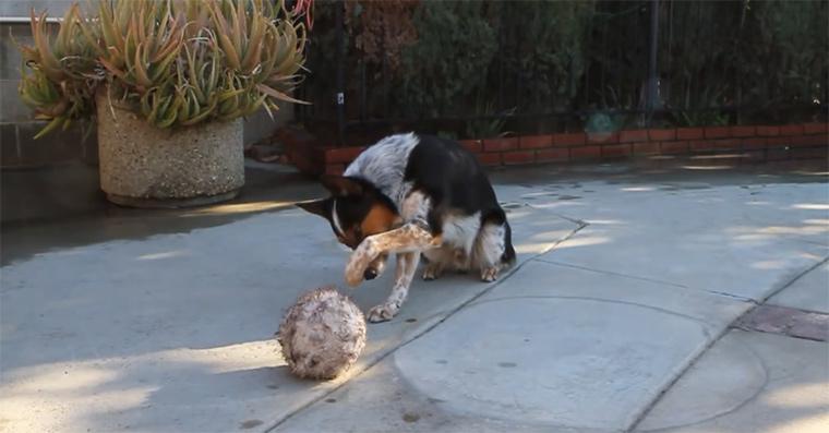 Hundedressur at it's best