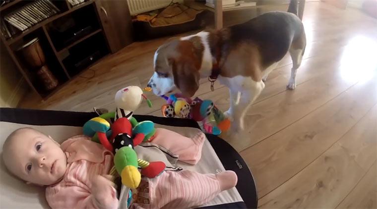 Hund entschuldigt sich bei Baby dogsorry