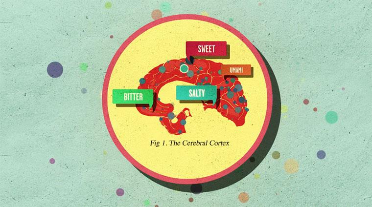 Was Zucker mit unserem Gehirn macht howsugaraffectsthebrain
