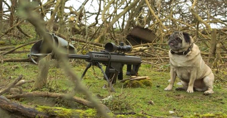 Scharfschützen-Mops sniper_pug