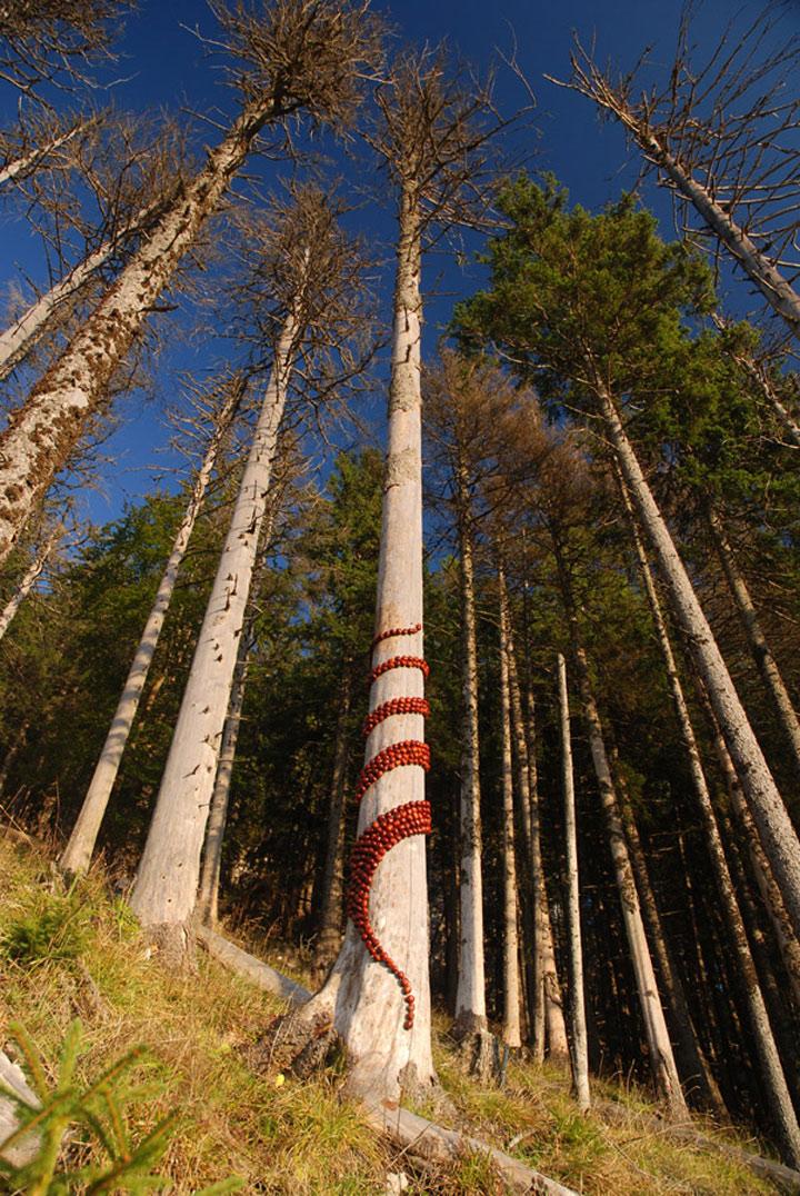 Kunst mit der Natur Land_Art_Sylvain_Meyer_07