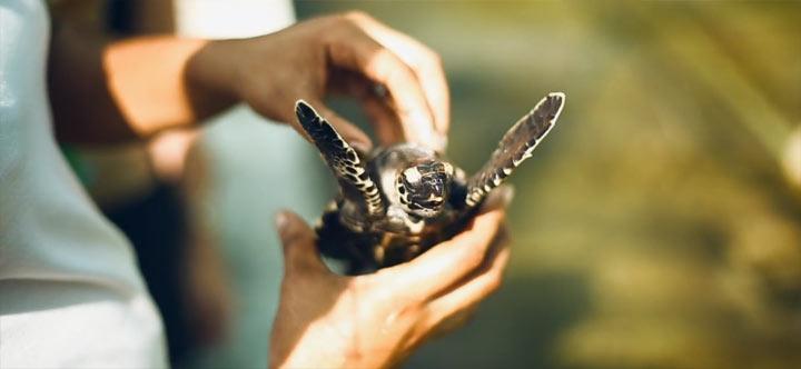 ästhetischer Reisebericht: Big Little World Seychellen BIGlittleWorld_03