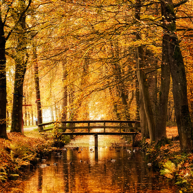 Landschafts-Fotografie: Oer-Wout Oer_Wout_05