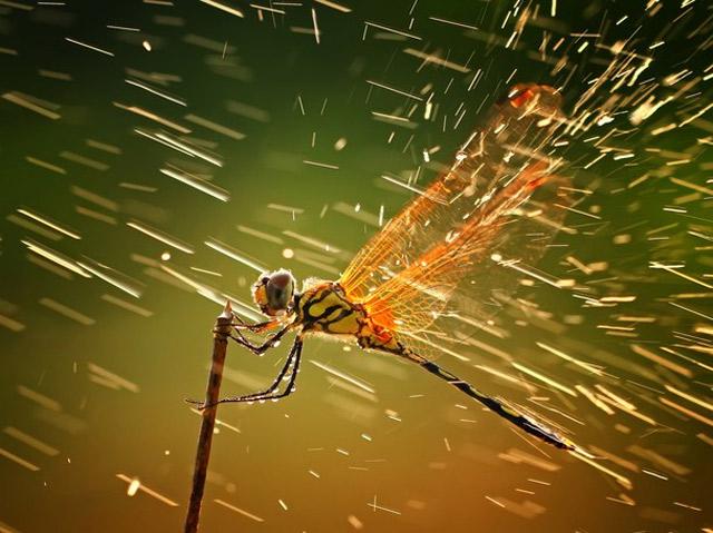 Gewinner des National Geographic Photo Contest 2011