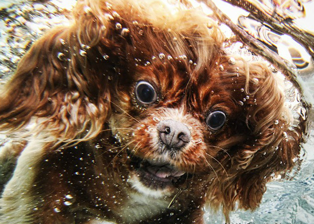 photography - Underwater Dogs
