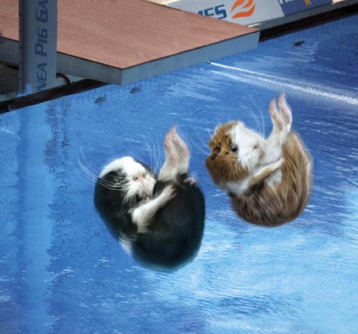 Meerschweinchen-Olympiade Guinea_Pig_Games_03