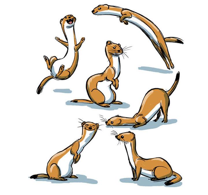 Tierillustrationen von A bis Z A-to-Zoo_08