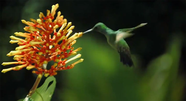 Slowmotion: The Beauty of Pollination