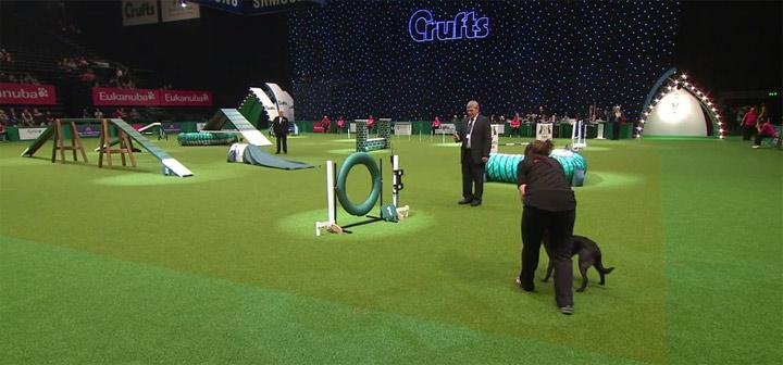Hundeparkour - Absoluter Scheißlauf crufts2012_dogshit