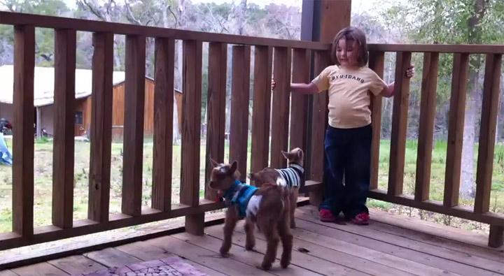 Fluff des Tages: Babyziegenhüpferei jumpgoatjump