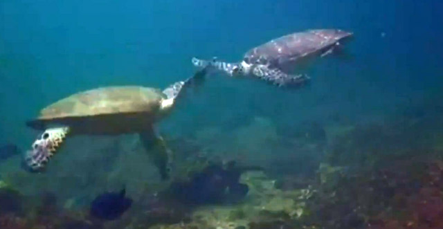 Turtle High Five Turtle_highfive