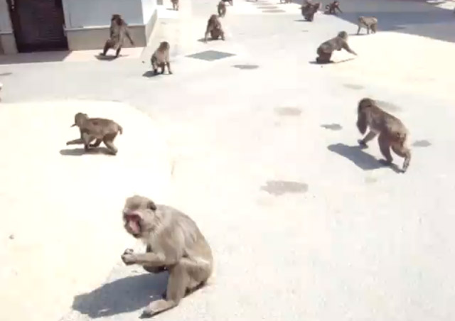 Time to feed the monkeys! affenfuetterzeit