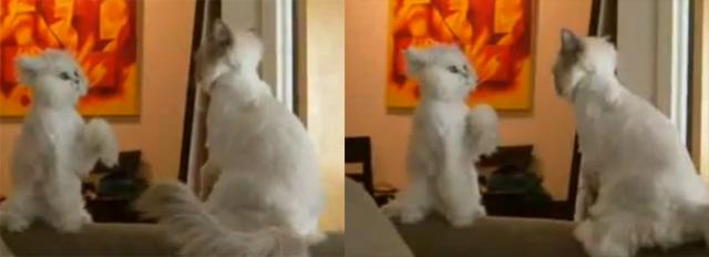 Cat or toy? catortoy