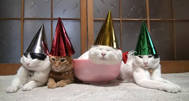 Sleepy cats with party hats cats_with_hats