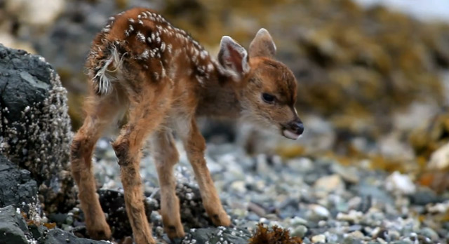 Fluff des Tages: New Born Deer Baby newbornkitz
