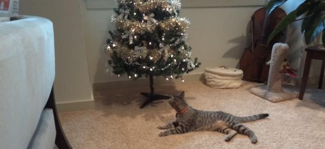 Blinder Kater Oskar und sein erster Weihnachtsbaum oscar_christmas_Tree