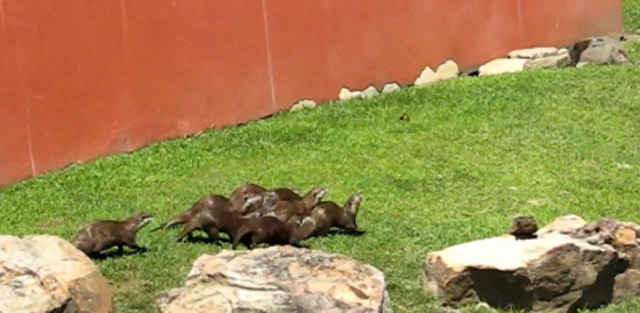 Otter vs. Schmetterling