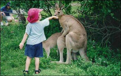 Snickers - Wenn's mal wieder länger dauert 185-kangaroo