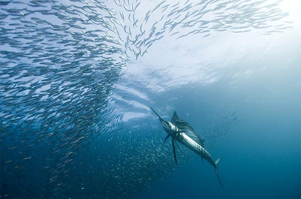 Beste Unterwasserfotografien 2010 Best_Underwater_Fotagraphy_2010_01