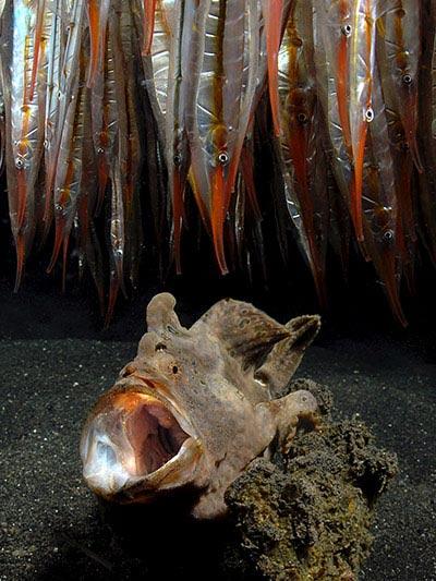 Beste Unterwasserfotografien 2010 Best_Underwater_Fotagraphy_2010_03